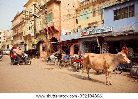 JAIPUR, INDIA - JAN 25: Street life with cafe, driving motorcycles and walking cow in old indian city on January 25 2015. Jaipur, with population 6,664000 people, is a capital of Rajasthan - stock photo