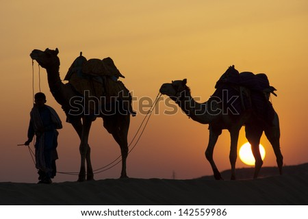 JAISALMER, INDIA-FEB 26: A desert local walks camels through Thar Desert, on Feb 26, 2013 in Jaisalmer, India.  Apart from farming, camel riding activity is another income source for desert villagers - stock photo