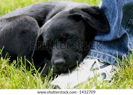 Jake was so tired that he fell asleep on my foot! - stock photo