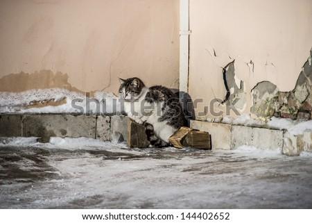 January evening. A lonely stray cat - stock photo