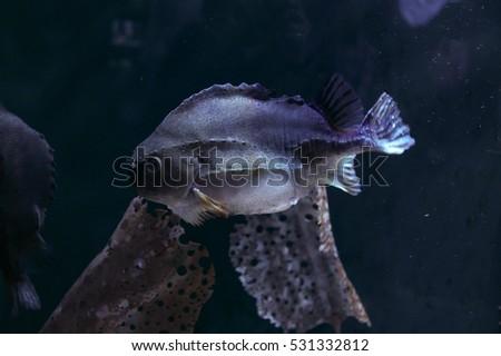 Japan Osaka Kaiyukan Aquarium Fish Stock Photo Royalty Free