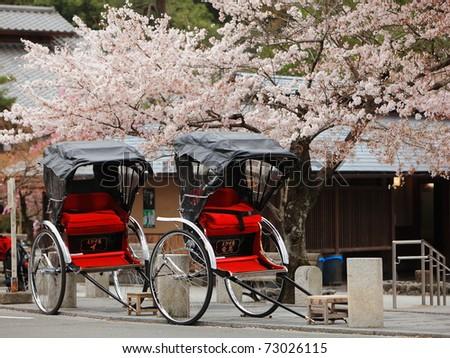 Japan ricksha with cherry blossoms tree - stock photo
