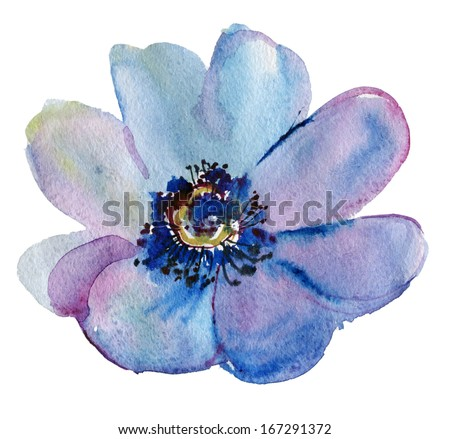 Japanese Anemone flower. Watercolor. - stock photo