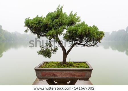 Japanese bonsai tree in pot at zen garden. Bonsai is a Japanese art form using trees grown in containers, elegant design with copy space for placement your text, mock up