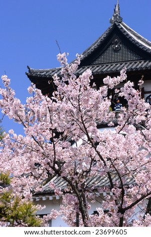 Japanese castle and cherry blossoms