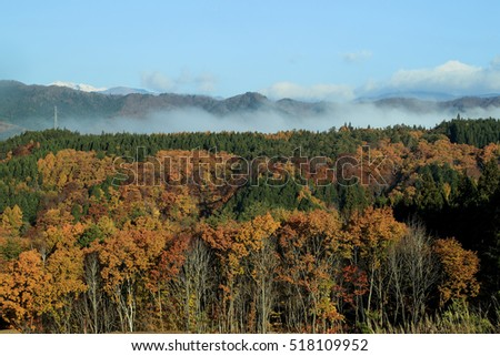 Japanese forest in autumn