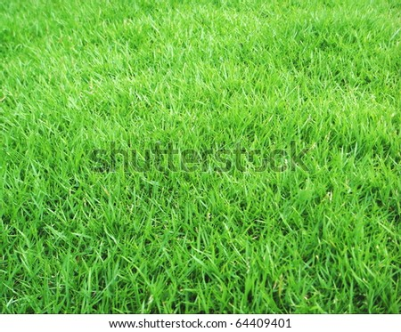 Japanese Green Grass - stock photo