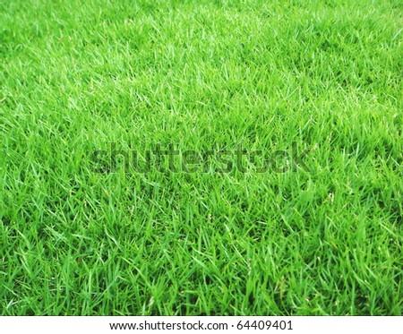Japanese Green Grass - stock photo