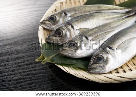 Japanese horse mackerel - stock photo