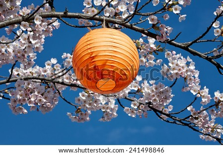 Japanese lantern in a blossoming cherry tree during Hanami - stock photo