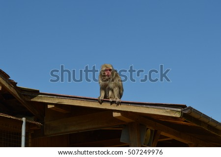 Japanese macaque sitting on the roof of the house against the sky
