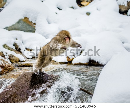 Monkey With Pet Dog Crossing River