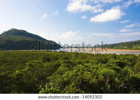 Japanese mangrove jungle - stock photo