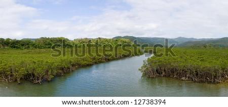 Japanese mangrove river - stock photo