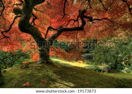 Japanese Maple inside view - stock photo