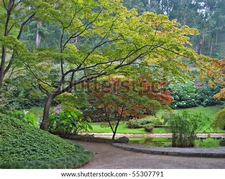 JAPANESE MAPLE TREES IN BEAUTIFUL PARK - stock photo