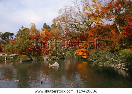 Japanese maple trees in the park, Kyoto, Japan.