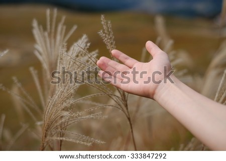Japanese pampas grass with hand.