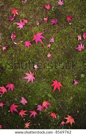 japanese red foliage in kyoto - stock photo