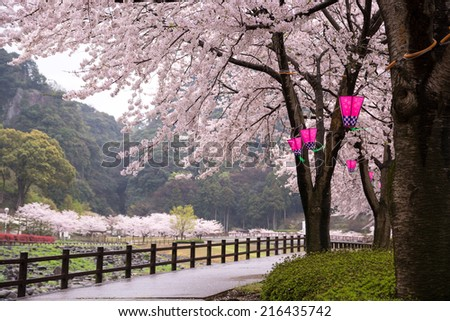 Japanese sakura and lantern - stock photo