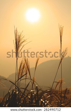 Japanese silver with sunset - stock photo