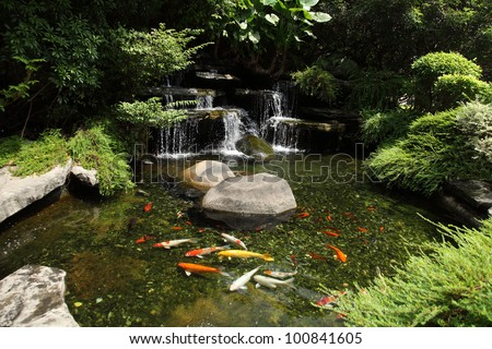 Japanese variegated carps swimming in garden pond
