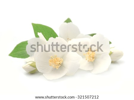 Jasmin flowers closeup on white background