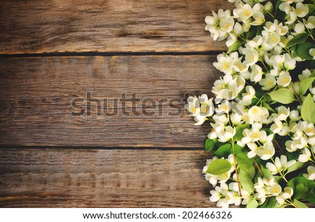 Jasmine flowers on a dark wood background. toning. selective focus on the middle left jasmine flower. - stock photo