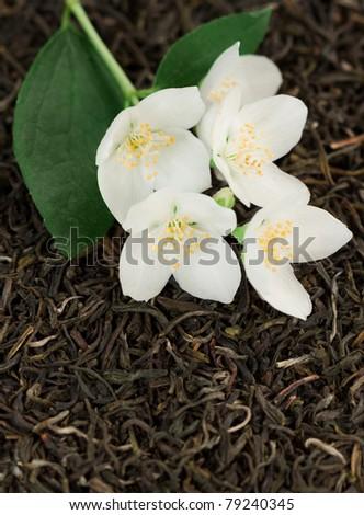 Jasmine flowers on green tea background - stock photo