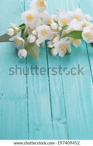 Jasmine flowers on wooden background. Selective focus, vertical. - stock photo