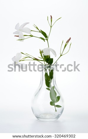 Jasmine in glass vase - stock photo