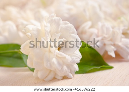 Jasmine (Other names are Jasminum, Melati, Jessamine, Oleaceae) flowers grouped on wooden board background