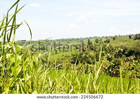 Jatiluwih rice terraces (Bali, Indonesia) - stock photo