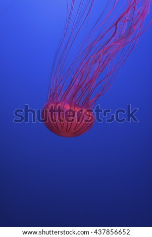 Jellyfish in deep sea, underwater life - stock photo