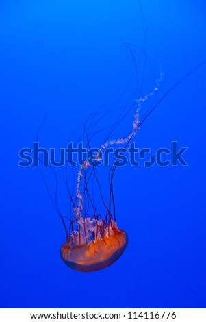 Jellyfish in the deep blue water - stock photo