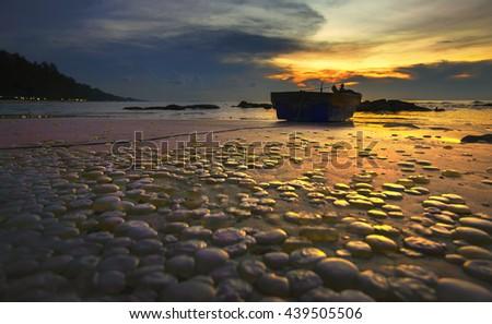 jellyfish ,jellyfish on sea beach and beach sunset. - stock photo