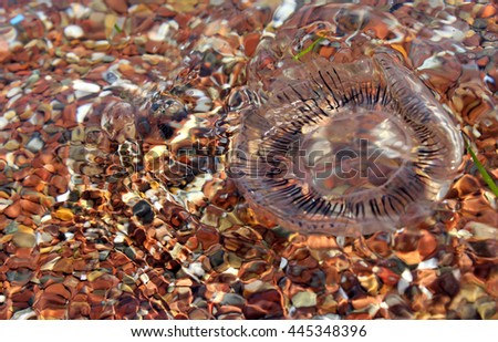 Jellyfish near the beach - stock photo