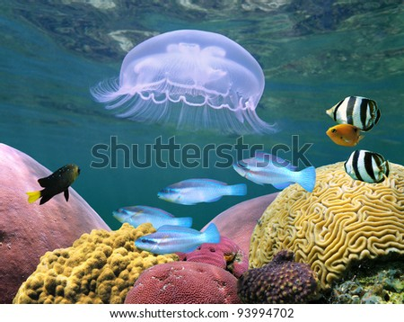 Jellyfish with colorful tropical fish and corals underwater - stock photo