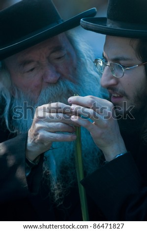 "JERUSALEM - OCT 10 : Ultra-Orthodox Jewish men inspect the ""Lulav"" in a market in Jerusalem on October 10 2011, ""Lulav"" is one of four species used during the Jewish celebration of ""Sukkot"" - stock photo"