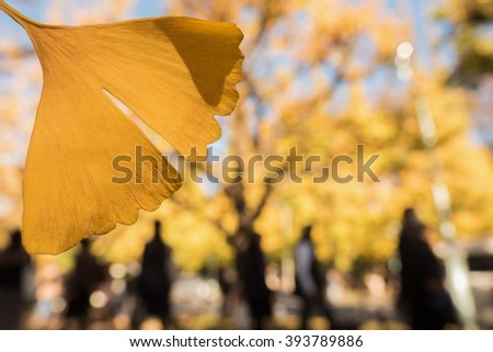 Jingu Outer Gardens of the ginkgo row of trees that autumn leaves