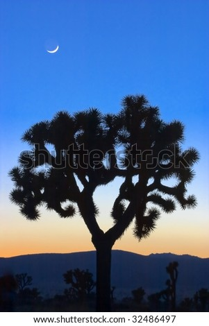 Joshua Tree and the New Moon - stock photo
