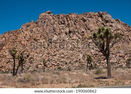 Joshua Tree National Park, California, USA - stock photo