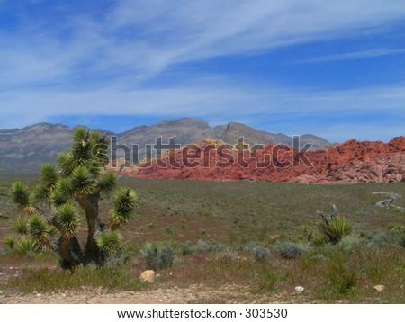 Joshua Tree, Red Rock Canyon, NV - stock photo