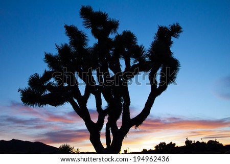 Joshua Tree Silhouette in Colorful Desert Sunset Landscape - stock photo