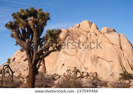 Joshua Tree Sunrise Cloud Landscape California National Park - stock photo