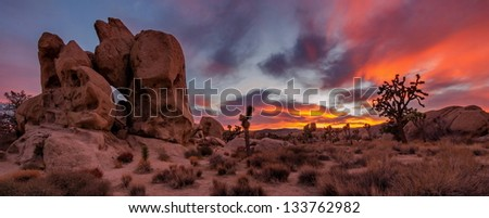 joshua tree sunset - stock photo