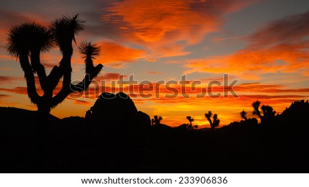 Joshua Tree Sunset Cloud Landscape California National Park - stock photo