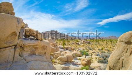 Joshua Tree Valley - stock photo