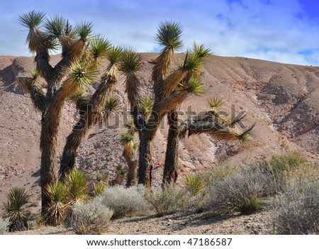Joshua Trees against background of pink tuff lava - Red Rock Canyon, California.