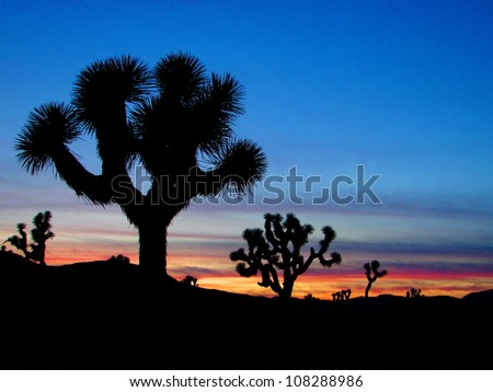 Joshua Trees silhouetted, Joshua Tree National Park, Palm Springs, California - stock photo